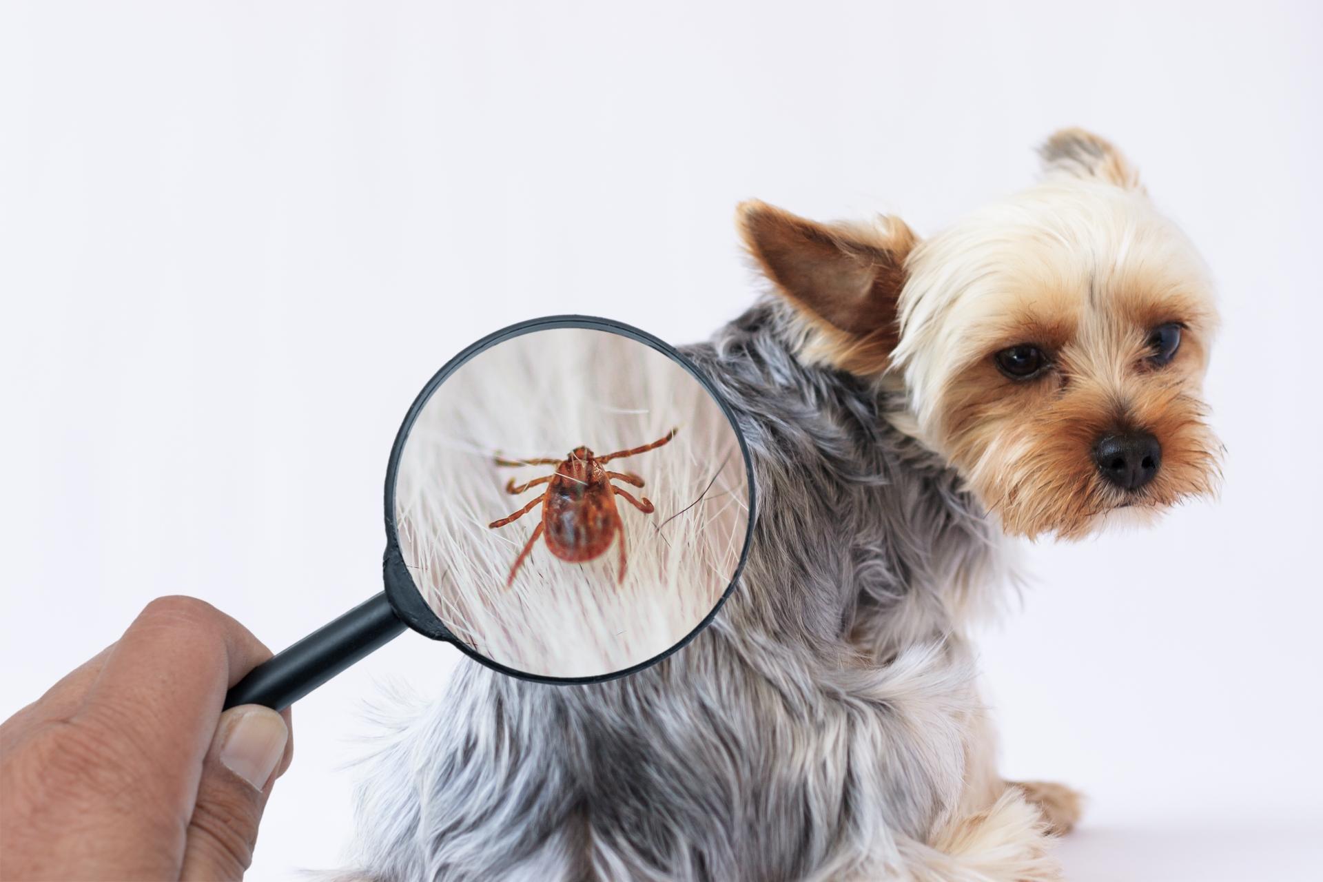 力 新型 ブニヤウイルス 感染